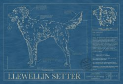 Llewellin Setter Dog Blueprint