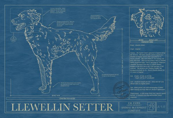 Llewellin Setter Dog Blueprint