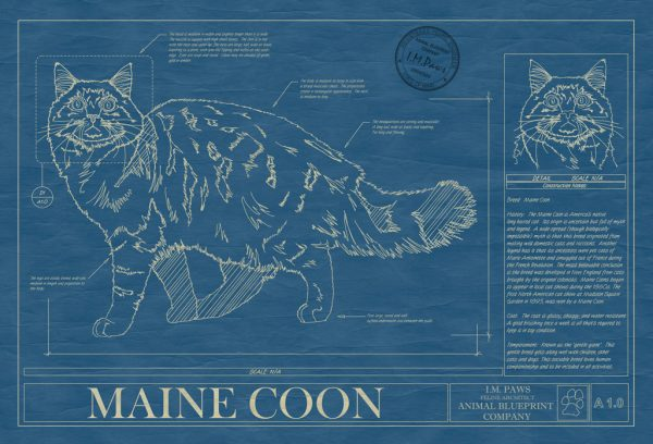 Maine Coon Cat Blueprint