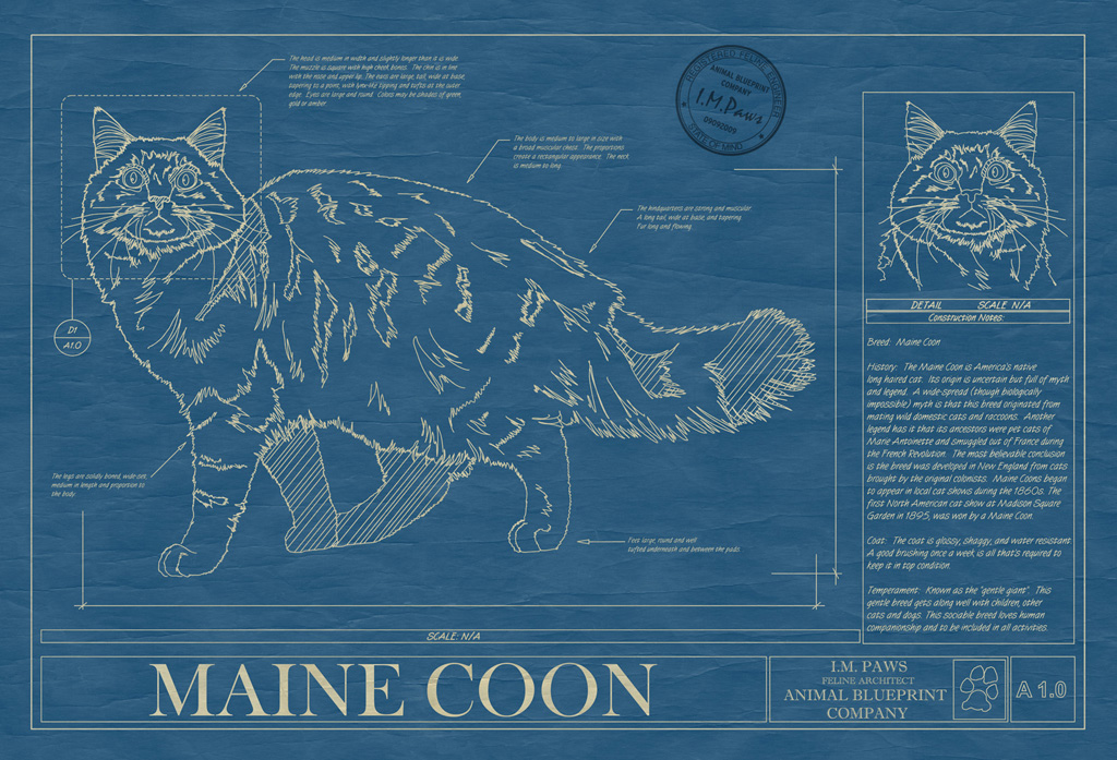 Maine coon animal blueprint company maine coon cat blueprint malvernweather Gallery