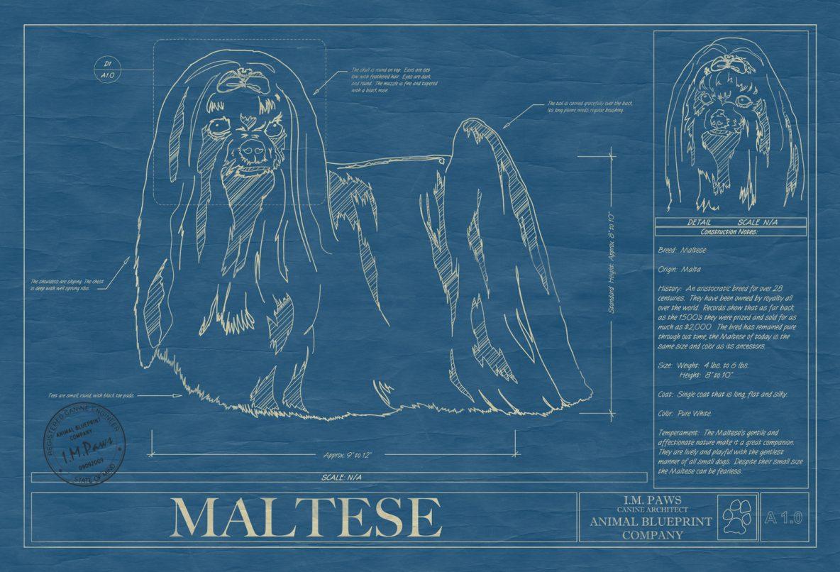 I n archives animal blueprint company maltese dog blueprint malvernweather Choice Image