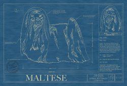 Maltese Dog Blueprint