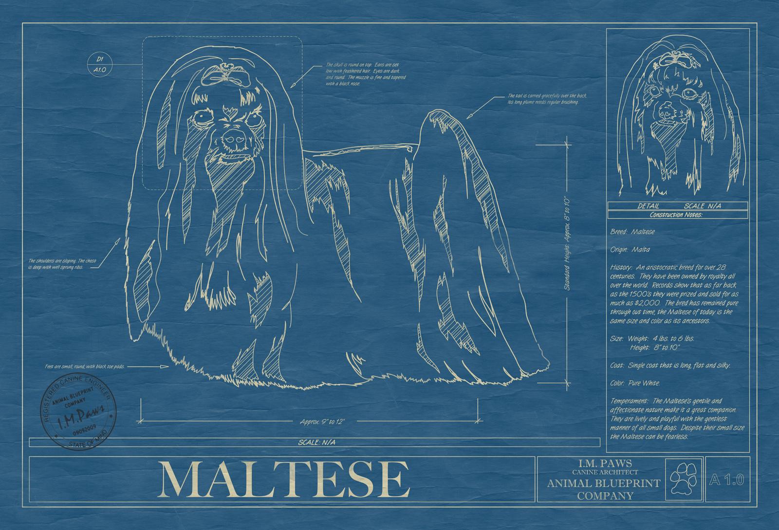 Maltese animal blueprint company maltese dog blueprint malvernweather Choice Image