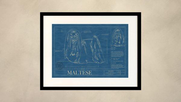 Maltese Dog Wall Blueprint
