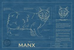 Manx Cat Blueprint