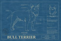 Bull Terrier Dog Blueprint