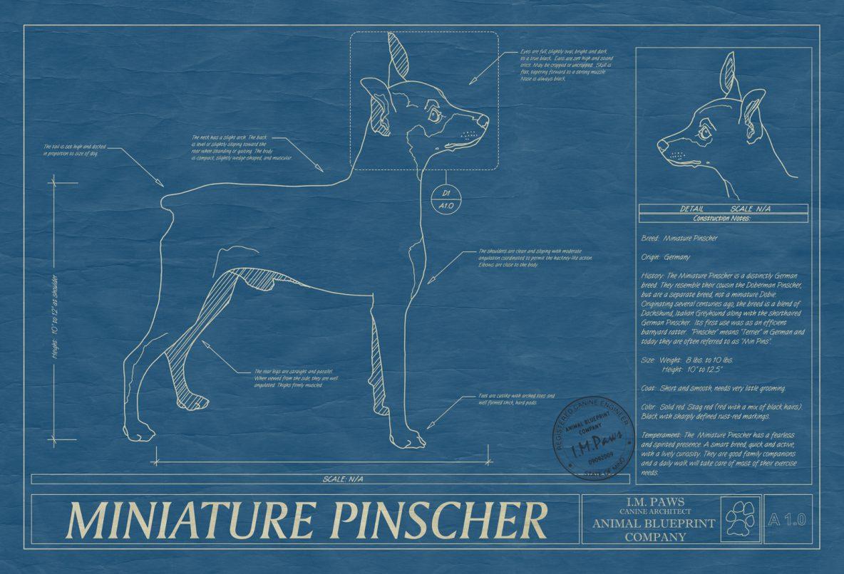 Miniature Pinscher Dog Blueprint