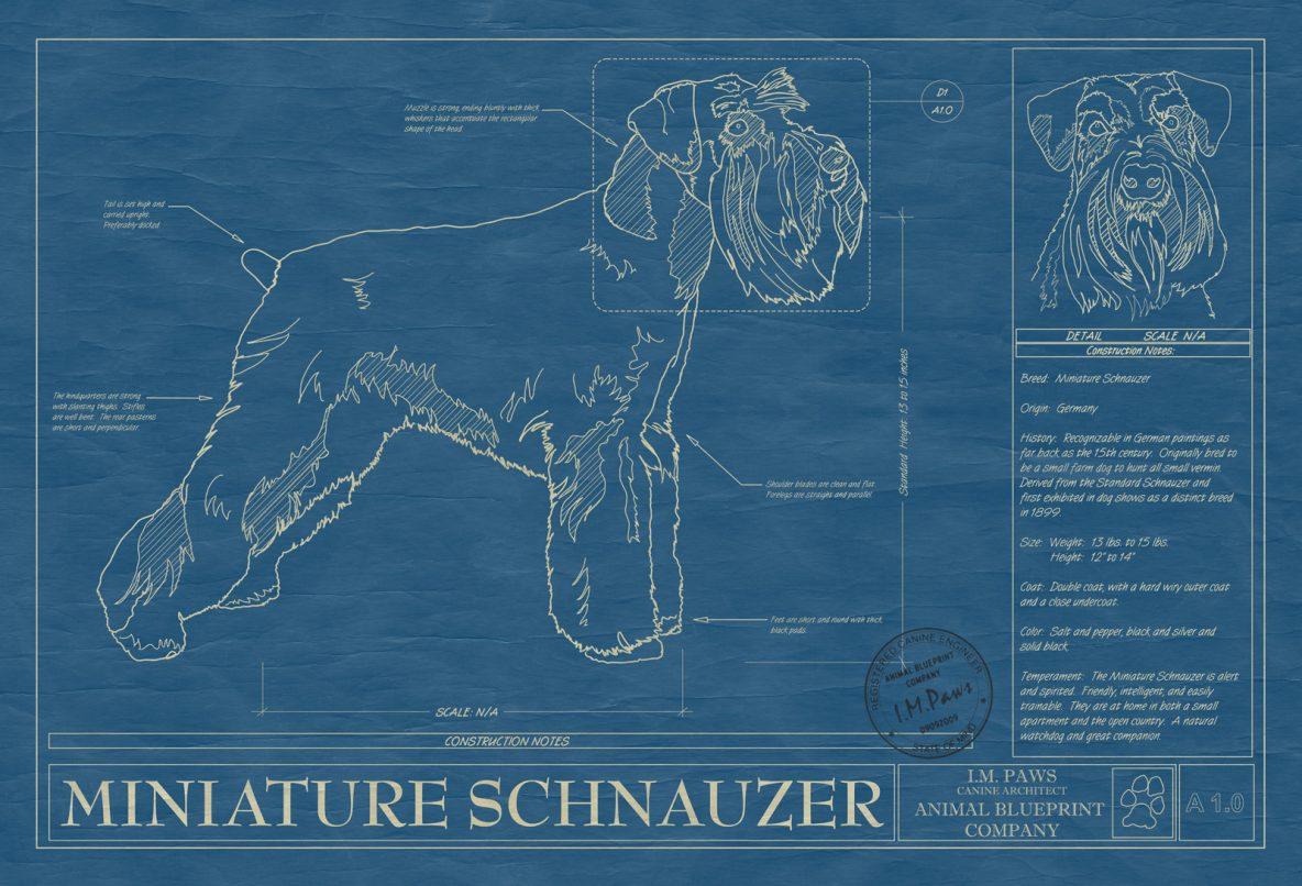 Miniature Schnauzer Dog Blueprint