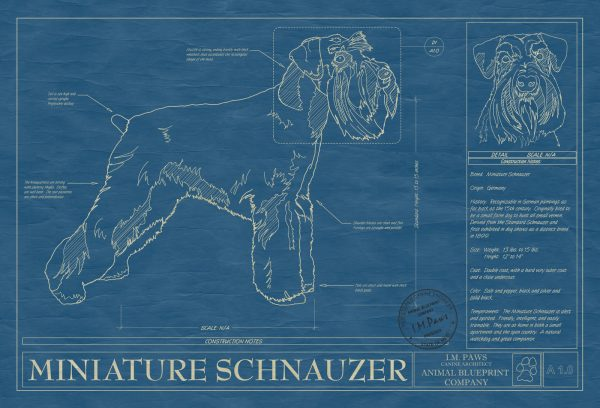Miniature Schnauzer Dog Blueprint