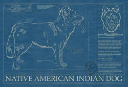 Native American Indian Dog Blueprint