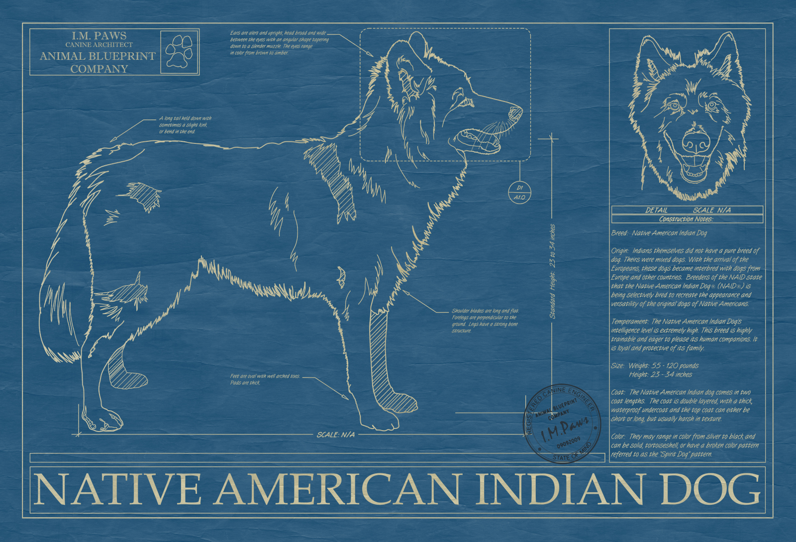 Native american indian dog animal blueprint company native american indian dog blueprint malvernweather Images