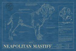 Neapolitan Mastiff Dog Blueprint