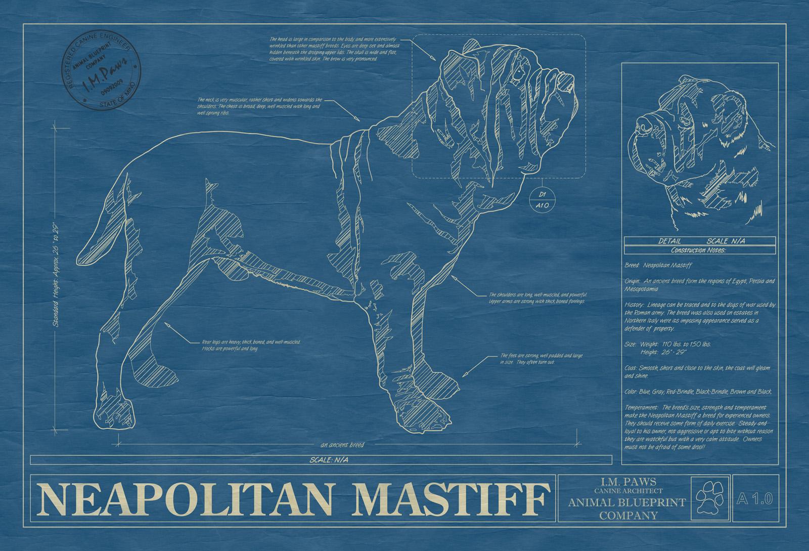 Neapolitan mastiff animal blueprint company neapolitan mastiff dog blueprint malvernweather Choice Image