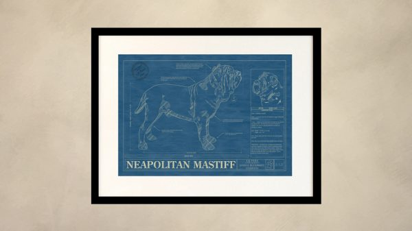 Neapolitan Mastiff Dog Wall Blueprint