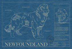 Newfoundland Dog Blueprint