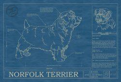 Norfolk Terrier Dog Blueprint