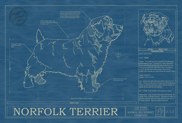 Norfolk Terrier Dog Blueprint