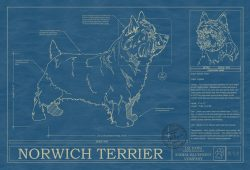 Norwich Terrier Dog Blueprint