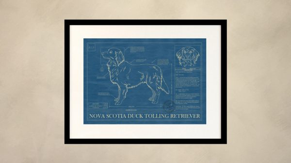 Nova Scotia Duck Tolling Retriever Dog Wall Blueprint