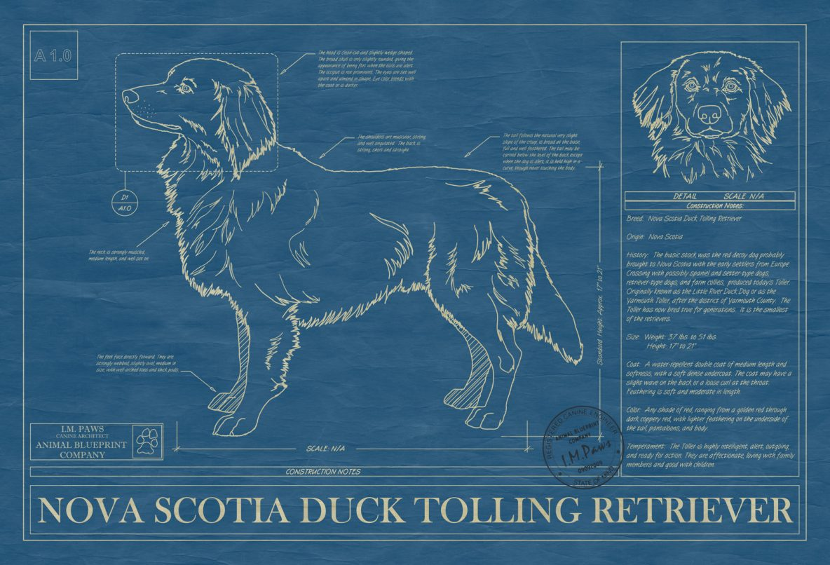 I n archives animal blueprint company nova scotia duck tolling retriever dog blueprint malvernweather Choice Image