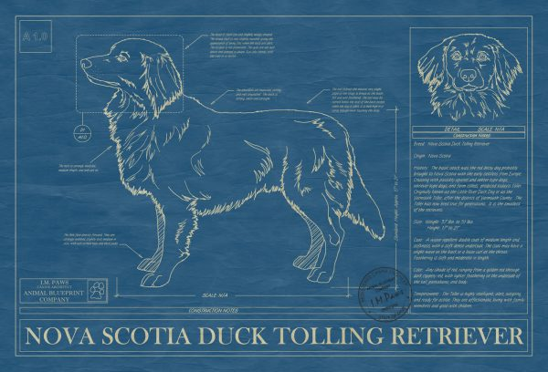 Nova Scotia Duck Tolling Retriever Dog Blueprint