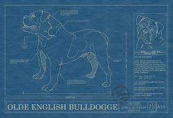 Olde English Bulldogge Dog Blueprint