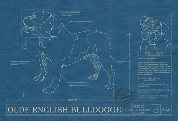 Olde English Bulldogge Dog Blueprint