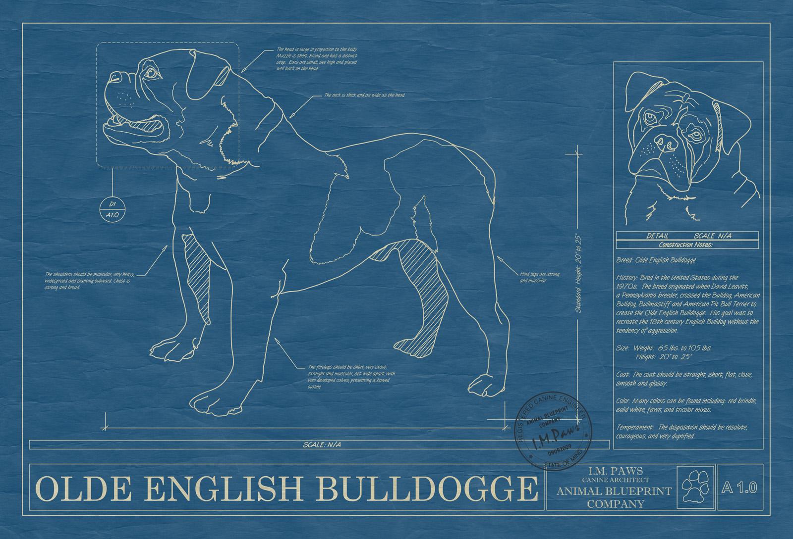 Olde english bulldogge animal blueprint company olde english bulldogge dog blueprint malvernweather Images