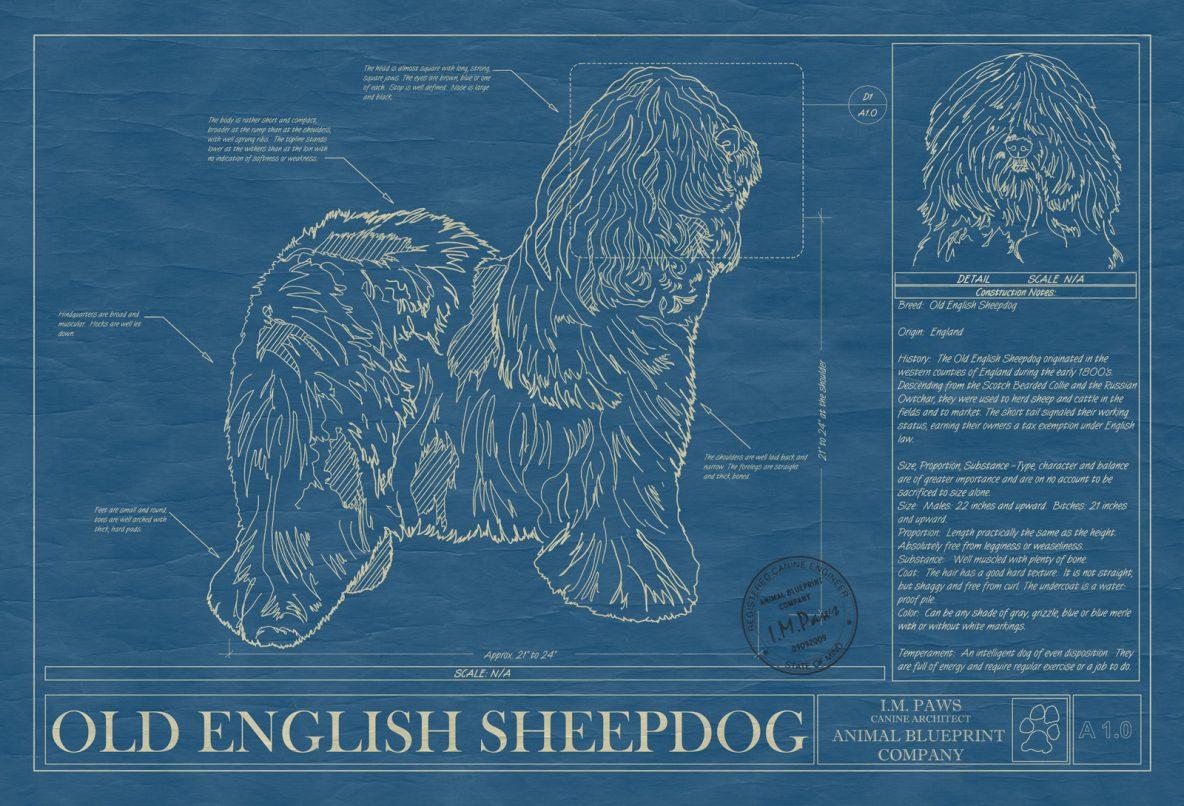 Old English Sheepdog Dog Blueprint