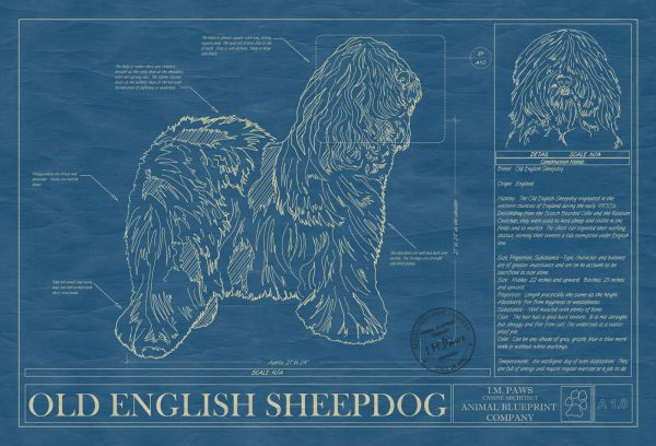 Old English Sheepdog Dog Blueprint
