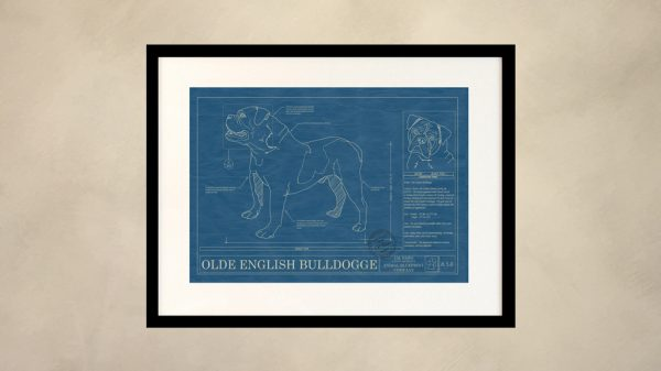 Olde English Bulldogge Dog Wall Blueprint