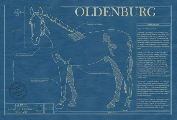 Oldenburg Horse Blueprint