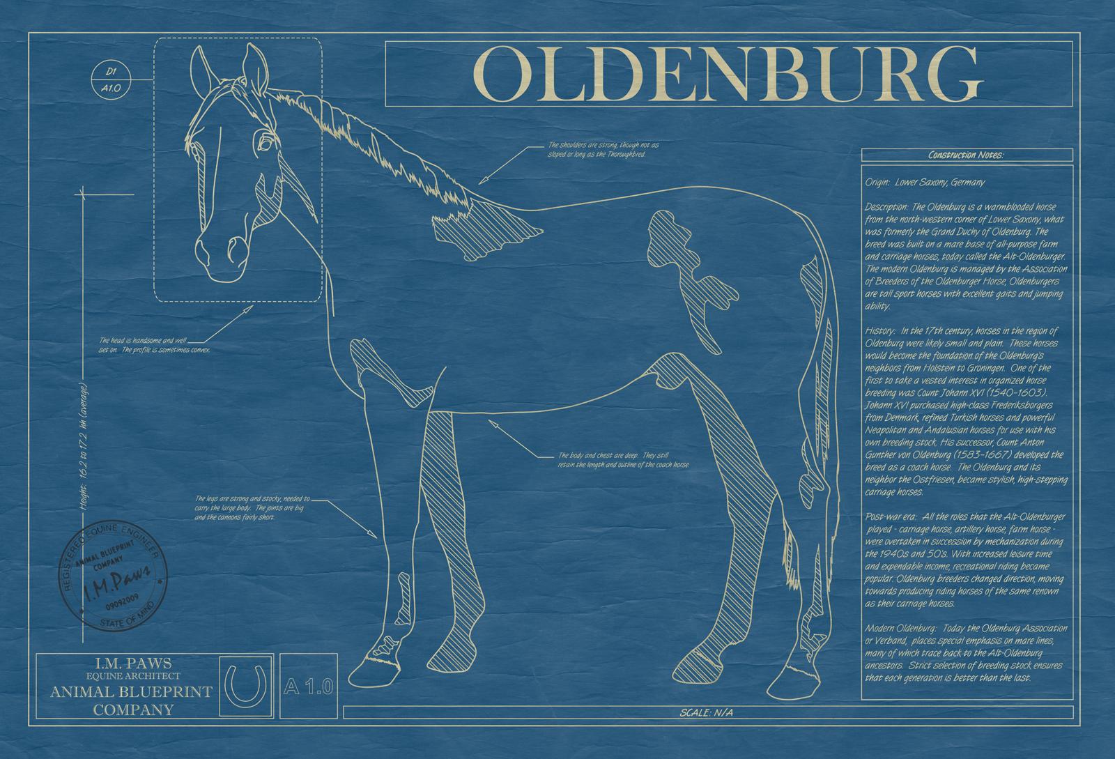 Oldenburg horse animal blueprint company oldenburg horse blueprint malvernweather Choice Image
