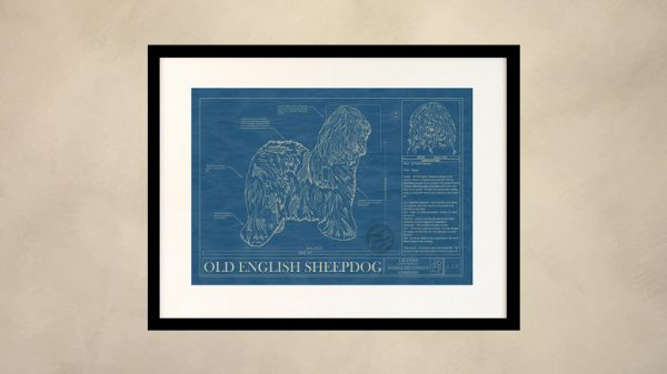 Old English Sheepdog Dog Wall Blueprint