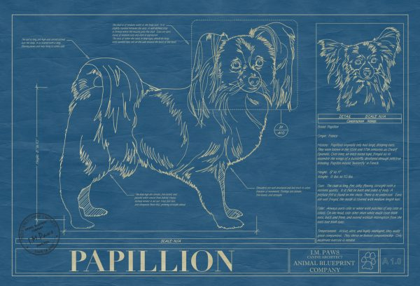 Papillion Dog Blueprint