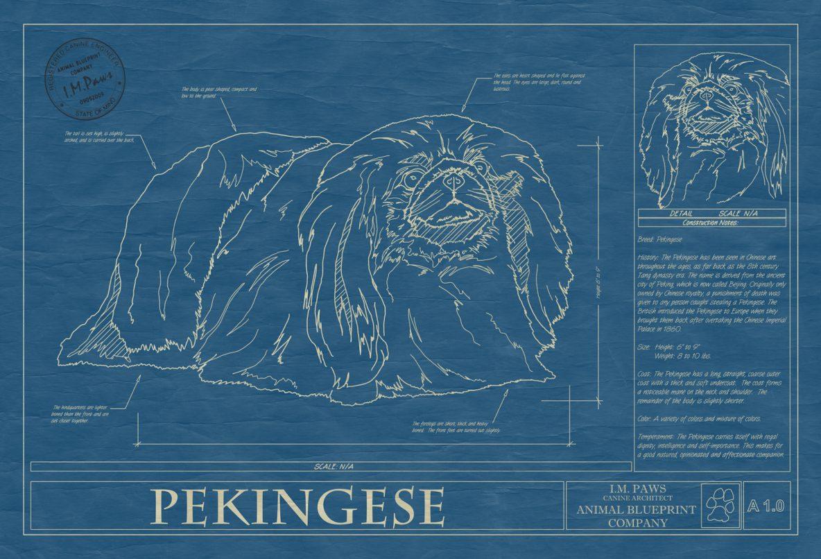 Pekingese Dog Blueprint