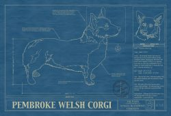 Pembroke Welsh Corgi Blueprint