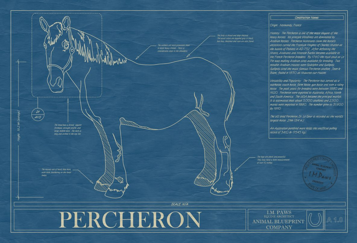Percheron Horse Blueprint