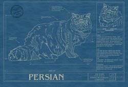 Persian Cat Blueprint