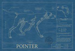 Pointer Dog Blueprint