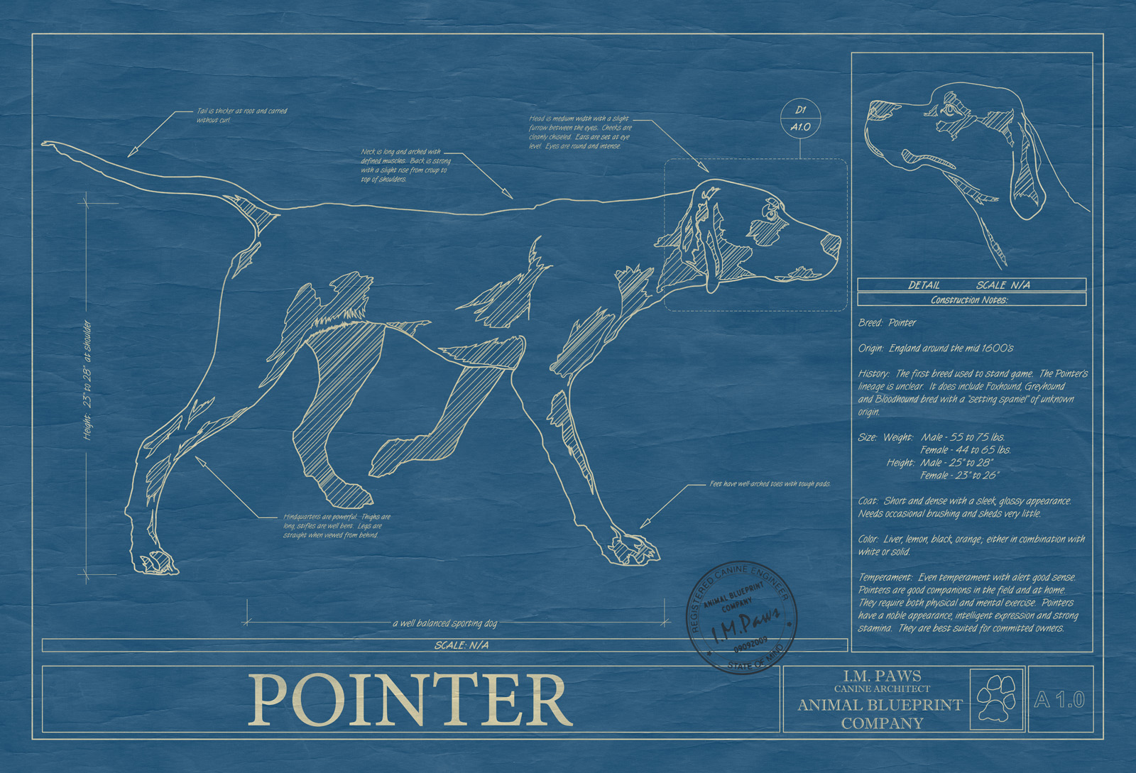 Pointer animal blueprint company pointer dog blueprint malvernweather Image collections