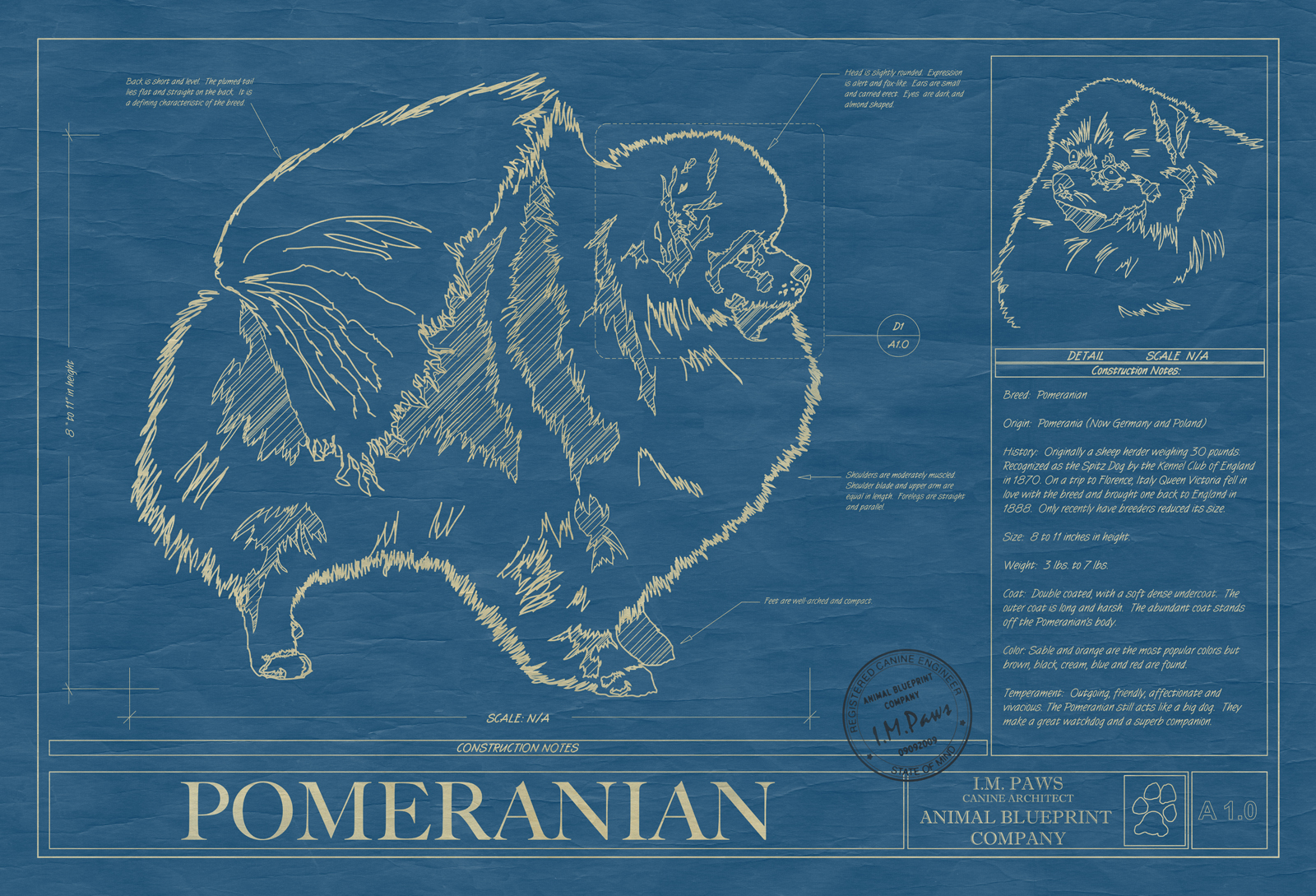 Pomeranian animal blueprint company pomeranian dog blueprint malvernweather Gallery