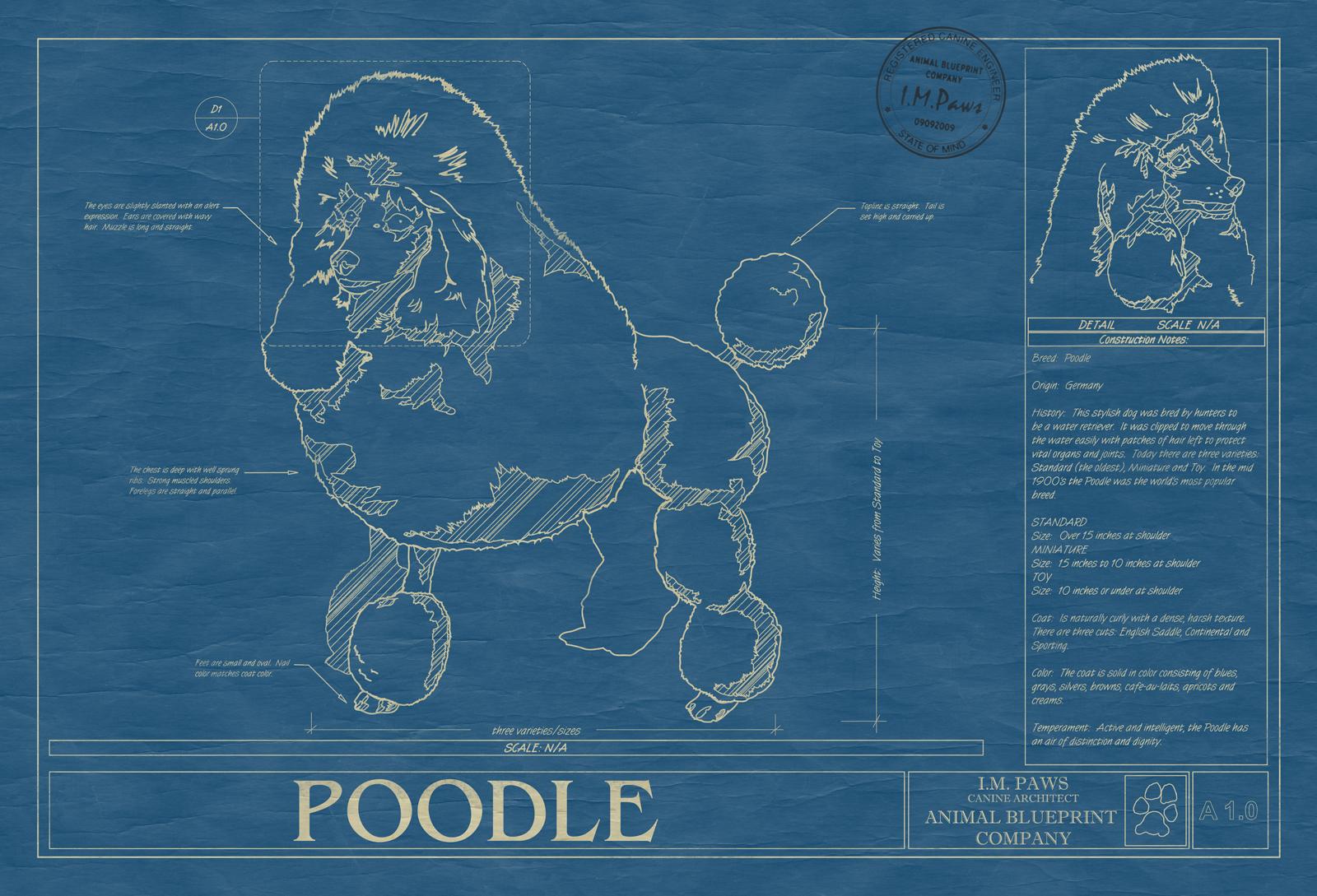 Poodle animal blueprint company poodle dog blueprint malvernweather Gallery