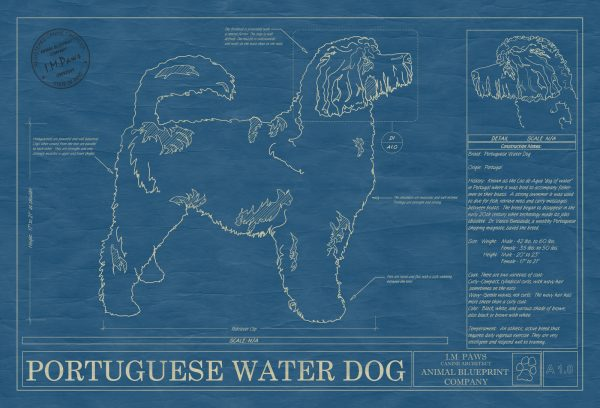 Portugese Water Dog Blueprint