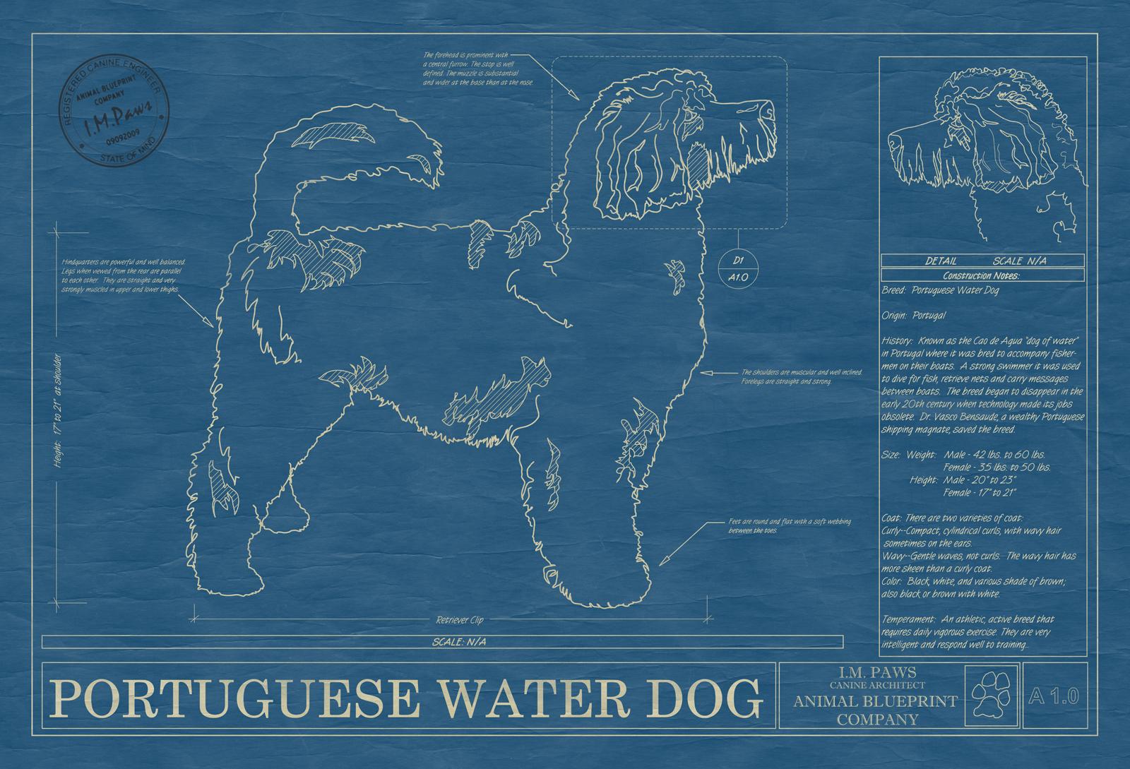 Portuguese water dog animal blueprint company portugese water dog blueprint malvernweather Gallery