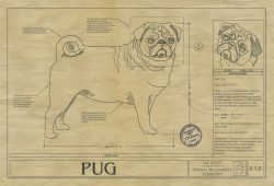 Pug Dog Drawing