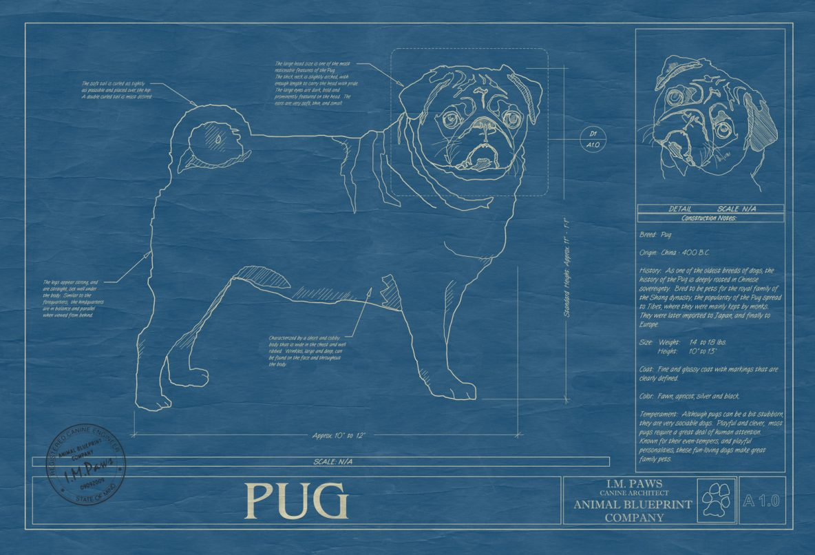 Pug Dog Blueprint