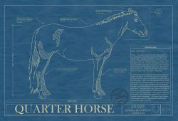 Quarter Horse Blueprint