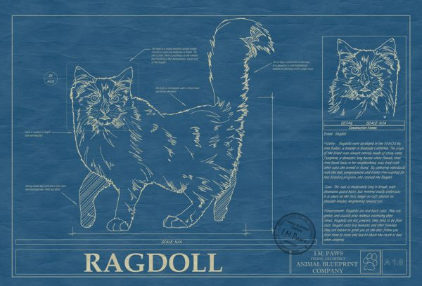 Ragdoll Cat Blueprint