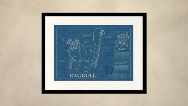 Ragdoll Cat Wall Blueprint